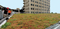 Rochester-based Elmer Davis Inc. Roofing worked with Wayside Gardens to retrofit four buildings at the Downtown Campus with green roofs.