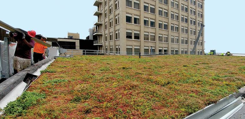 Photo of workers outfitting the Downtown Campus with green roofs.